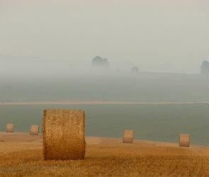 В Калачеевском районе с поля похитили 17 тюков сена