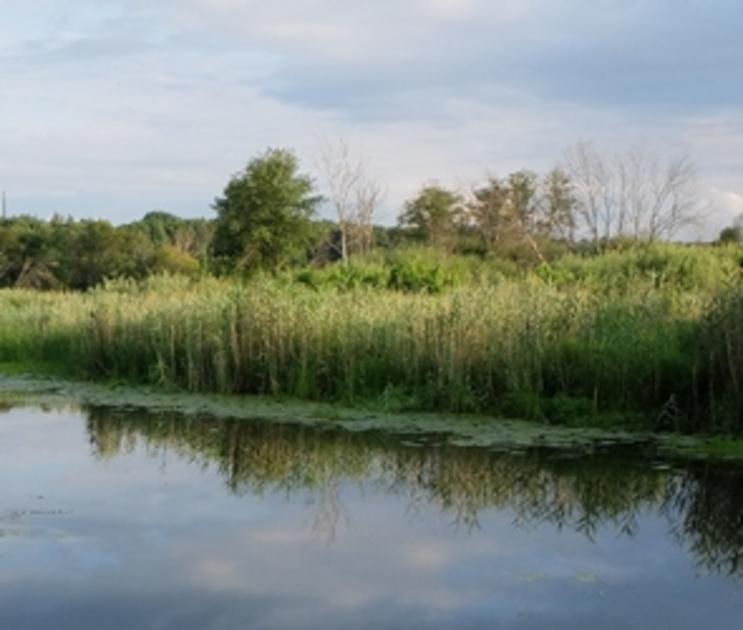 45-летняя женщина утонула в озере под Воронежем