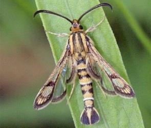 В Воронежской области нашли новый вид бабочек