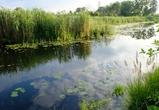 В воронежских водоемах нашли инфекцию, подобную холере