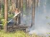 В Воронеже горят пустыри и лес  130460