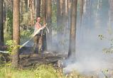 В Воронеже горят пустыри и лес