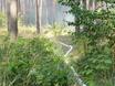 В Воронеже горят пустыри и лес  130464