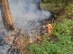 В Воронеже горят пустыри и лес  130467