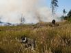 В Воронеже горят пустыри и лес  130468