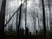 В Воронеже горят пустыри и лес  130469