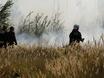 В Воронеже горят пустыри и лес  130472