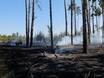 В Воронеже горят пустыри и лес  130476