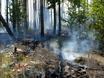 В Воронеже горят пустыри и лес  130478