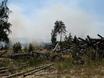 В Воронеже горят пустыри и лес  130479