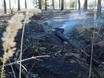 В Воронеже горят пустыри и лес  130481