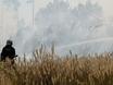В Воронеже горят пустыри и лес  130487