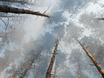 В Воронеже горят пустыри и лес  130488