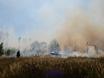В Воронеже горят пустыри и лес  130489