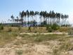 В Воронеже горят пустыри и лес  130491