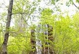 Роспотребнадзор забраковал воду в источнике «Святого Тихона Чудотворца»