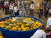 Выставка «Воронеж — город-сад»  131389