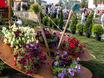 Выставка «Воронеж — город-сад»  131399