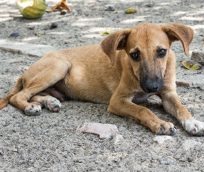 В День города в Воронеже пройдет акция помощи бездомным животным