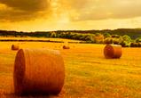 В Воронежской области «мясной кластер» влияет на посевную компанию