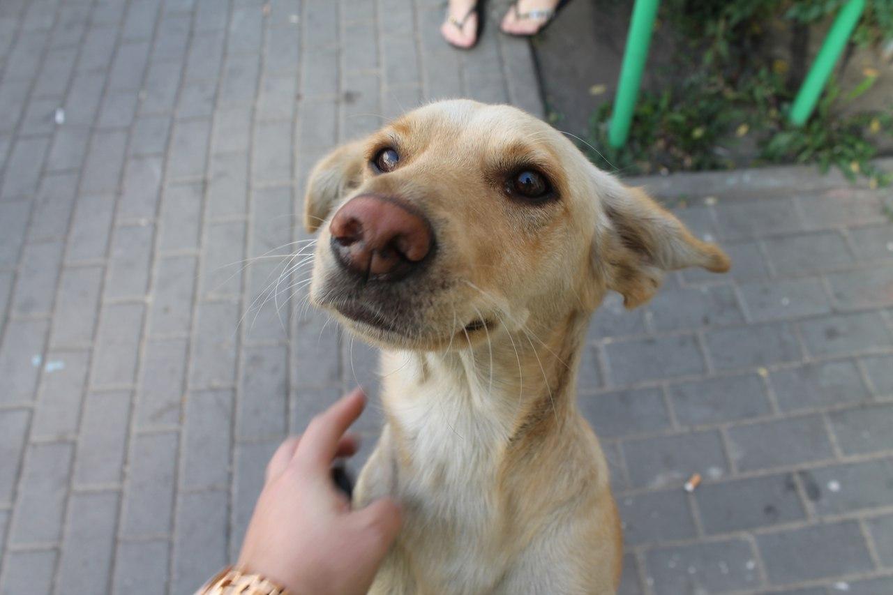 Из-за перенесённого стресса спасённая из ямы собака Белка потеряла щенков