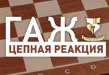Проблему бездомных животных  в Воронеже надо решать вместе