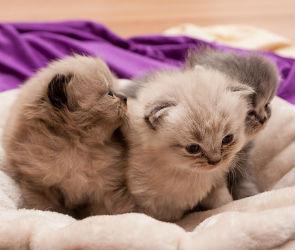 После выхода «Битвы салонов» воронежцы жаждут  массажа котятами с улицы Лизюкова