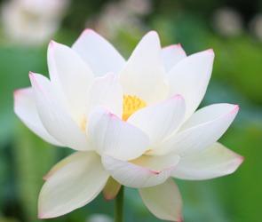 14 миллионов рублей для помощи онкобольным детям собрала акция «Белый цветок»