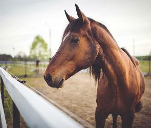 Очевидцы: «Во время пожара на конезаводе могли заживо сгореть лошади»