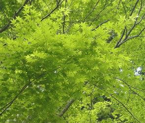 2000 саженцев деревьев и 5800 кустарников высадят в Воронеже до конца года