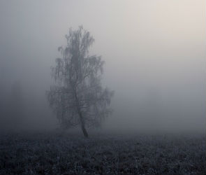 Выходные в Воронеже будут дождливыми и пасмурными