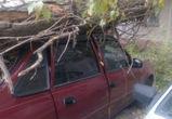 В Воронеже сильный ветер повалил деревья на три автомобиля (ФОТО)