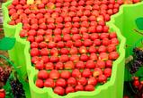 Почему воронежцы не покупают яблоки из местных садов