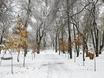 Первый снег в Воронеже  135768