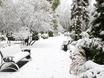 Первый снег в Воронеже  135769