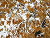 Первый снег в Воронеже  135771
