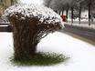 Первый снег в Воронеже  135772