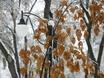 Первый снег в Воронеже  135777