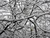 Первый снег в Воронеже  135784