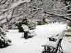 Первый снег в Воронеже  135785