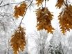 Первый снег в Воронеже  135792