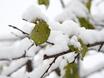 Первый снег в Воронеже  135793