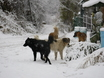 Первый снег в Воронеже  135797