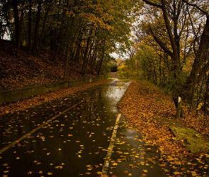 В Воронеже в выходные будет дождливо и пасмурно