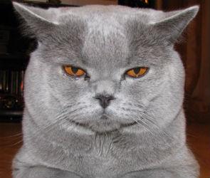 Ростовская полиция борется с преступностью при помощи кота (ФОТО)