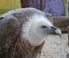 Воронежский зоопарк можно будет посетить бесплатно