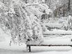 Воронеж заметает снегом  136777