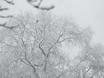 Воронеж заметает снегом  136781