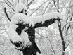 Воронеж заметает снегом  136786