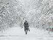 Воронеж заметает снегом  136795